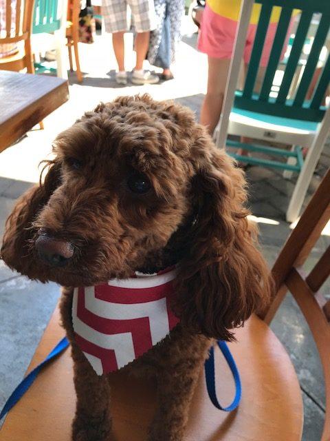 Doggy Daycare - Boarding   Bark Pet Resort Myrtle Beach